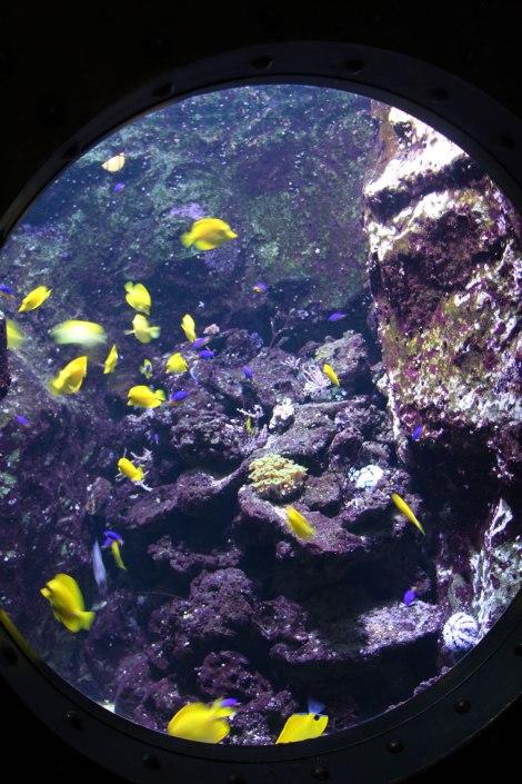 Pairi Daiza - Aquarium