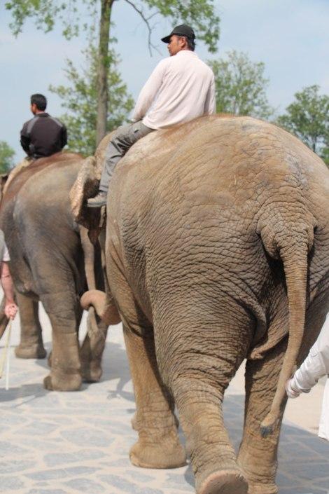 Pairi Daiza - La danse des éléphants